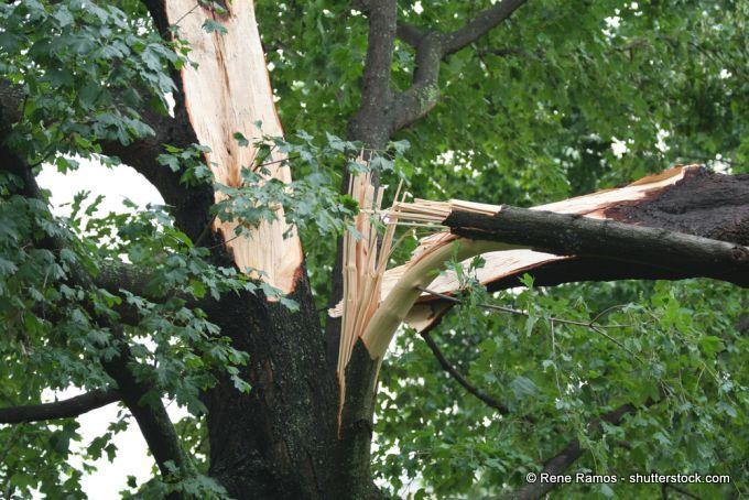 Sturmschaden am Baum