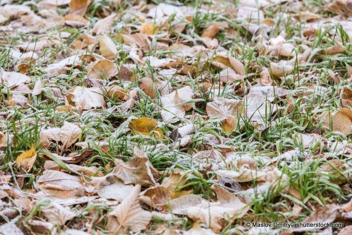 Herbst: Bodenfrost auf Rasen