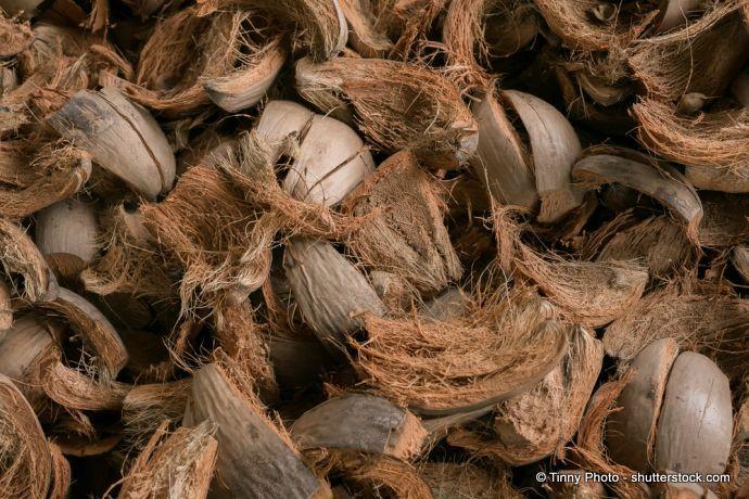 Kokosnussschalen: Fasern Ersatz für Torf