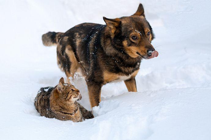 Hund und Katze im Schnee mit Winterfell