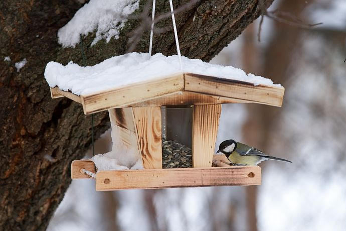 Kohlmeise am Vogelhaus