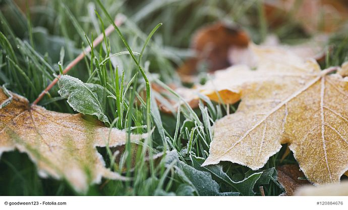 Erster Frost auf dem Rasen
