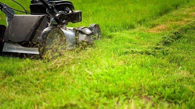Rasen mähen mulchen