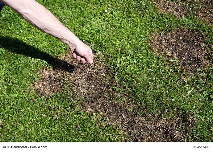 Rasen ausbessern durch Sähen von Rasensamen