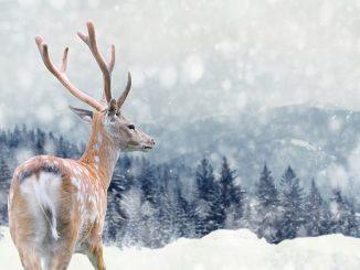 Hirsch im Winter © byrdyak