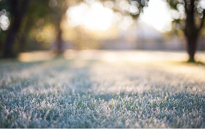 Winterrasen