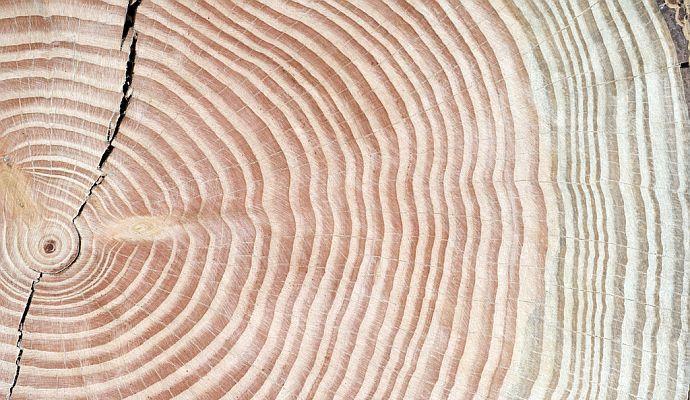 Holzeigenschaften