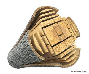 Holzklassen