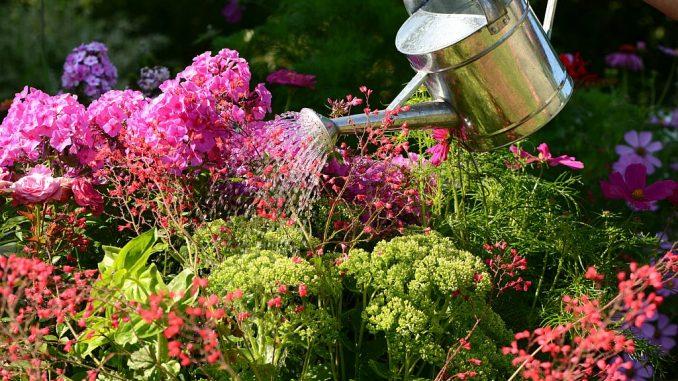 Blumen mit Gießkanne gießen | Bild: K.-U. Häßler fotolia.com