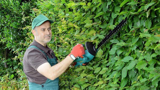 Gärtner schneidet Hecke mit Akku-Heckenschere