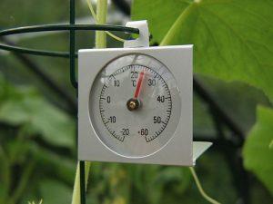 Gewächshaus-Thermometer | Bild: Vitavia