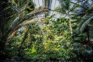 Palmengarten in Frankfurt am Main | Bild: parallel_dream fotolia.com