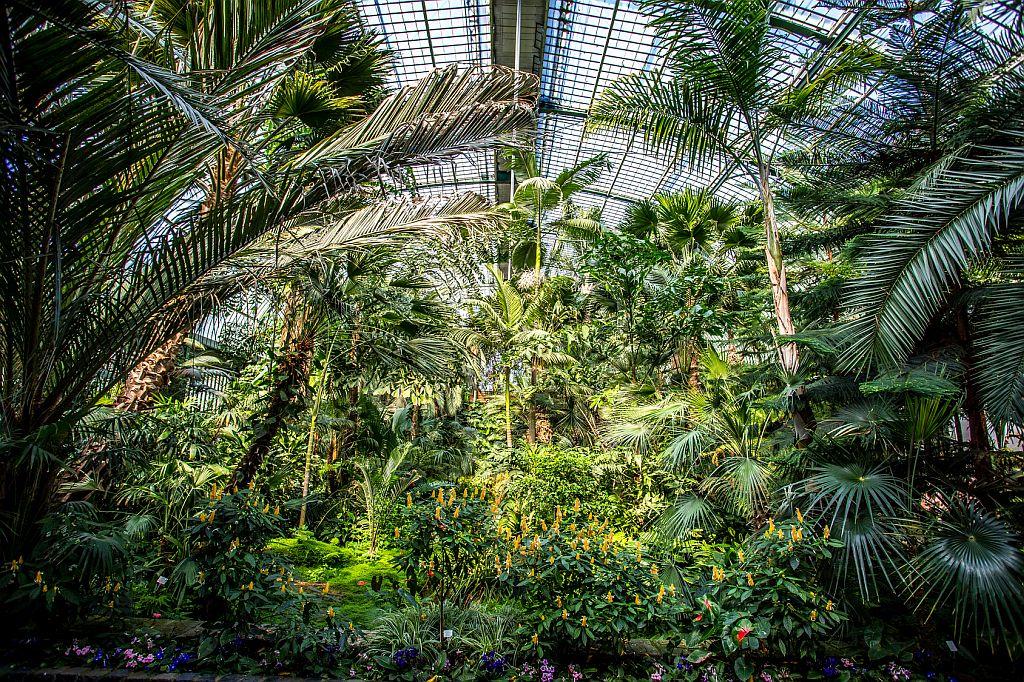 palmengarten  frankfurt  main bild paralleldream
