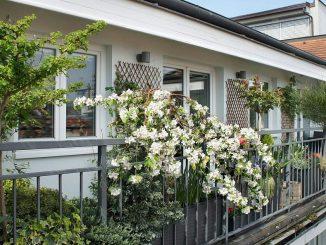 Zwergbäume als Kübelpflanzen auf Terrasse/Balkon | Bild: Tanouchka fotolia.com