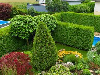 Hecke als grüner Raumteiler und Sichtschutz