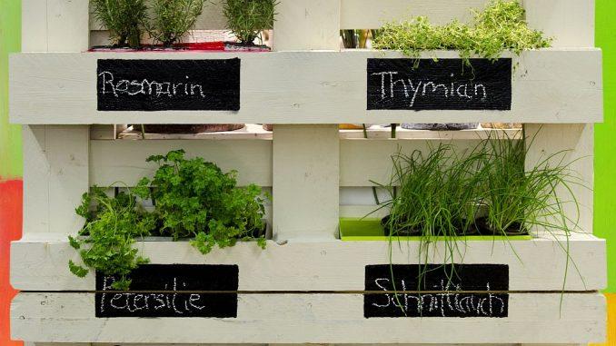 Vertikaler Kräutergarten aus Palette