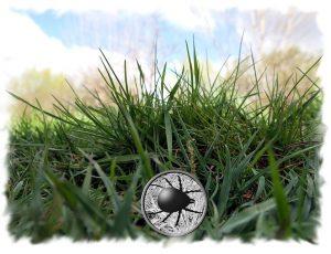 Zecke im Gras (Bildbearbeitung/Collage)