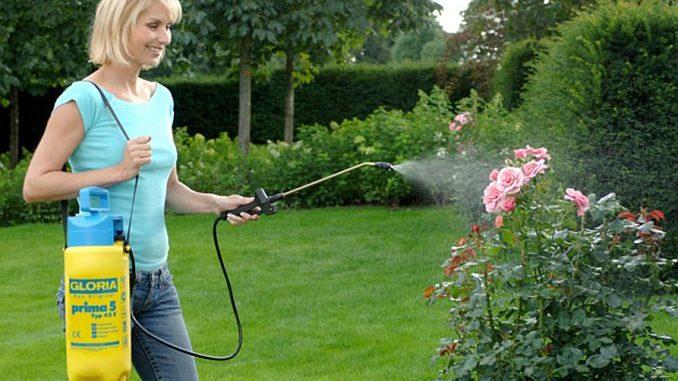 Drucksprüher zur Rosenbewässerung