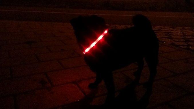Hund mit Leuchthalsring | Bild: edinger