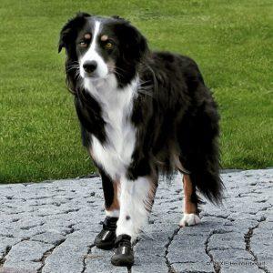 Schutzstiefel/Schutzsocken für den Hund | Bild: Trixie