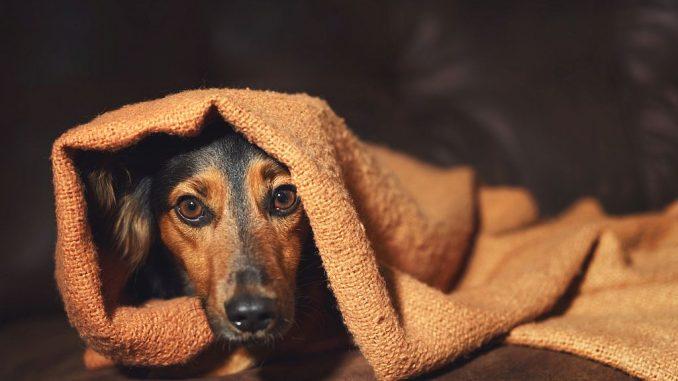 Hund versteckt sich unter einer Decke | Bild: Lindsay_Helms fotolia.com