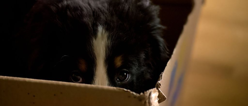 Hund versteckt sich im Karton | Bild: jojoo64 fotolia.com