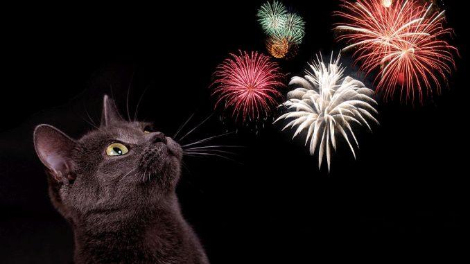 Katze und Feuerwerk | Bild: grafikplusfoto fotolia.com
