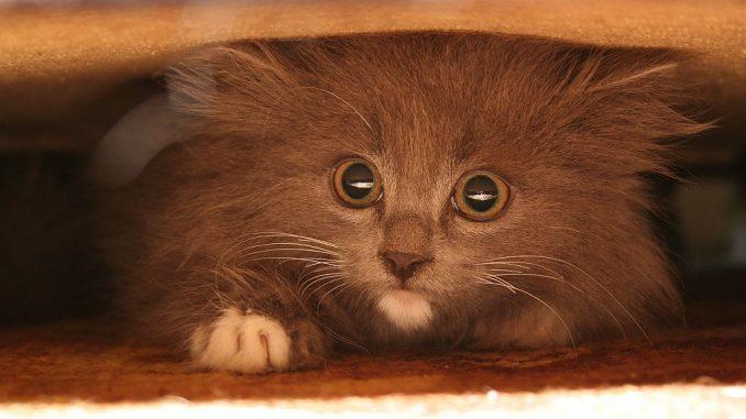 Katze versteckt sich unter Möbelstück | Bild: Said80
