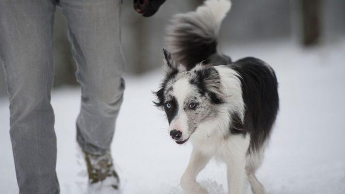 Winterspaziergang mit Hund | Bild: DoraZett fotolia.com