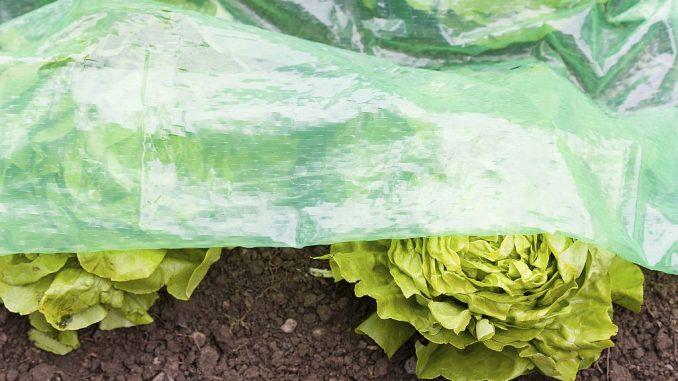Frühbeet-Folie mit Schlitzen | Bild: Windhager