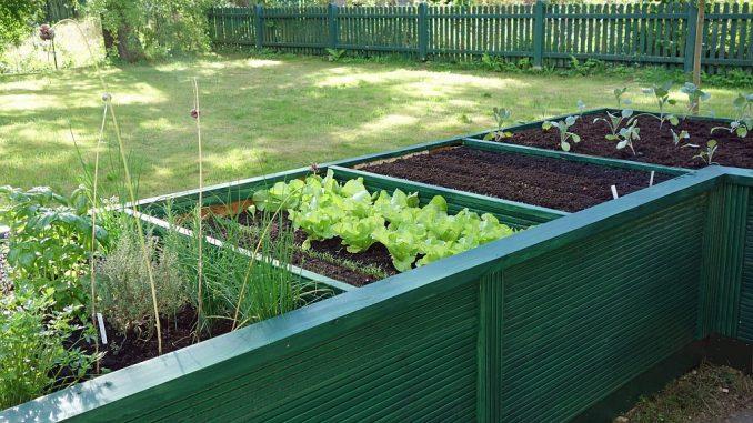 Hochbeet mit Salat und Gemüse | Bild: Elke Hötzel fotolia.com