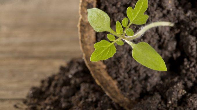 Tomatenpflanze geschützt | Bild: Petra Schüller fotolia.com