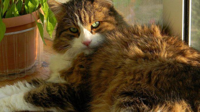Katze vor Fliegengitter-Fenster | Bild: Akuptsova