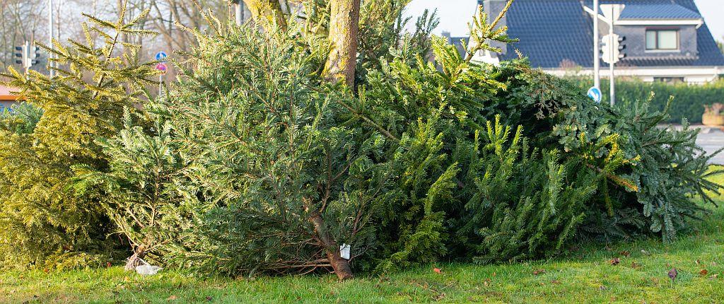 Sammelstelle für ausgediente Weihnachtsbäume | Bild: ShDrohnenFly stock.adobe.com