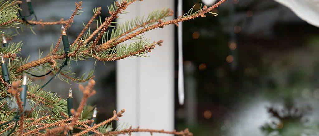 Weihnachten vorbei - was nun mit dem Weihnachtsbaum? Bild: Tanja Esser stock.adobe.com