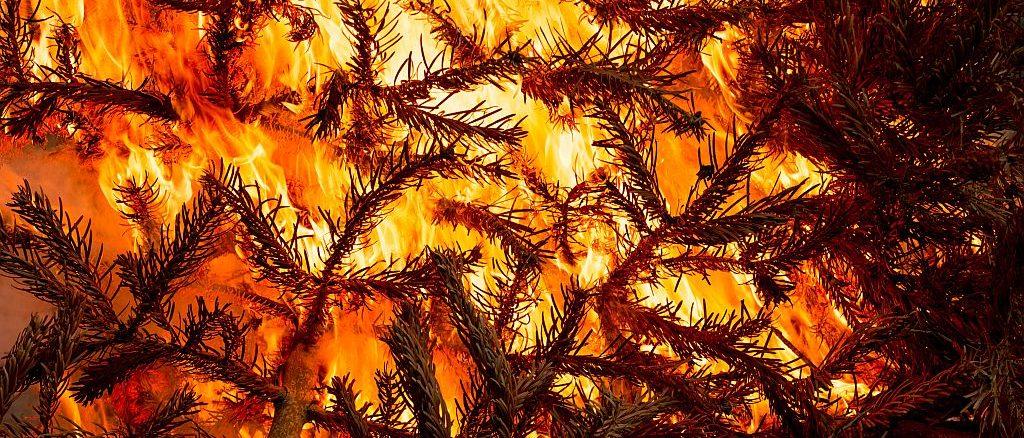 Weihnachtsbaum in Flammen | Bild: Ekaterina Myshenko stock.adobe.com