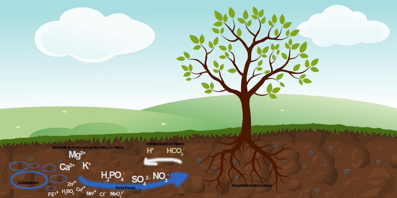 Boden Pflanze Nährstoffe: Makro- und Mikronährstoffe einer Pflanze | Schaubild: edinger