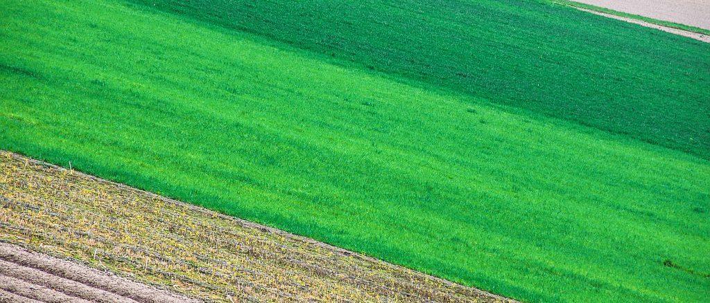 Mehrfelderwirtschaft | Bild: blende11.photo stock.adobe.com