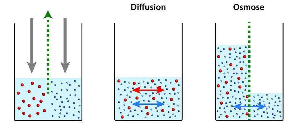 Schema Osmose vs. Diffusion | Bild: natros stock.adobe.com