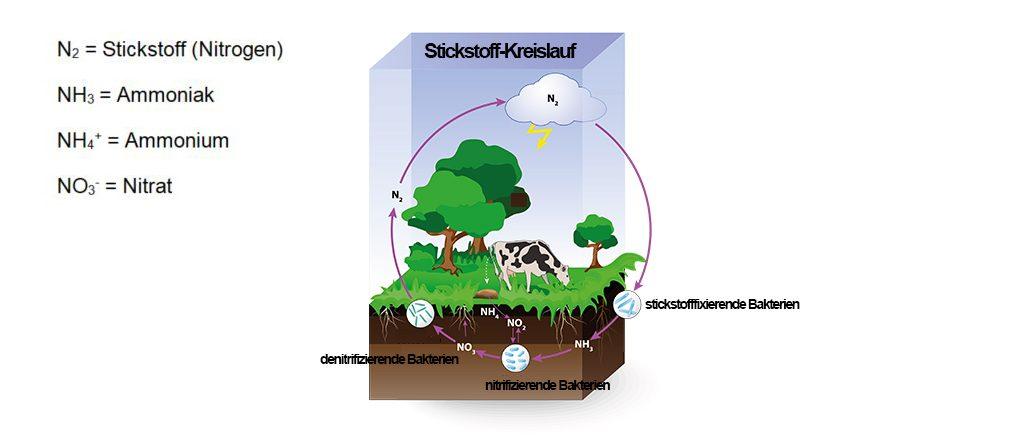 Stickstoffkreislauf | Grafik: designua stock.adobe.com